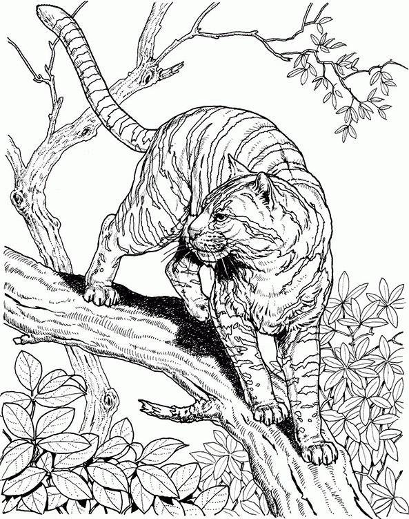 Ausmalbilder für Erwachsene Tiger 1