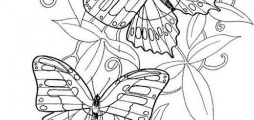 Malvorlagen Erwachsene Schmetterling 4
