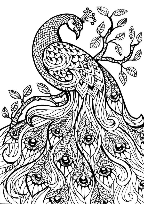 Ausmalbilder Erwachsene Vogel 02 Ausmalbilder Für Erwachsene