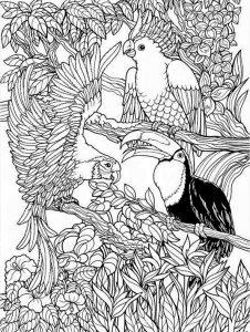 Ausmalbilder Schwierige Vogel 5