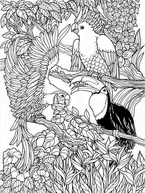 vogel 6  ausmalbilder für erwachsene