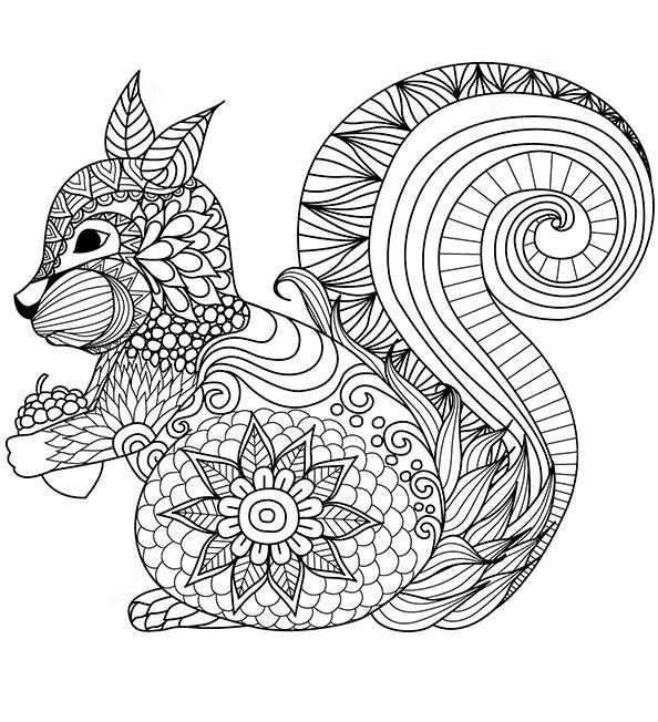 Malvorlagen Erwachsene Eichhörnchen 12