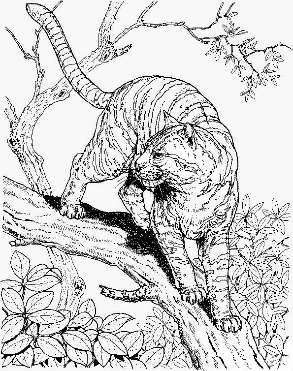 Ausmalbilder Erwachsene Tiger 17