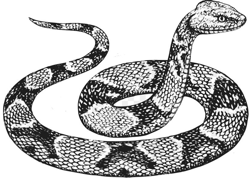 Ausmalbilder Erwachsene Schlange 19