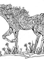 Pferde 14