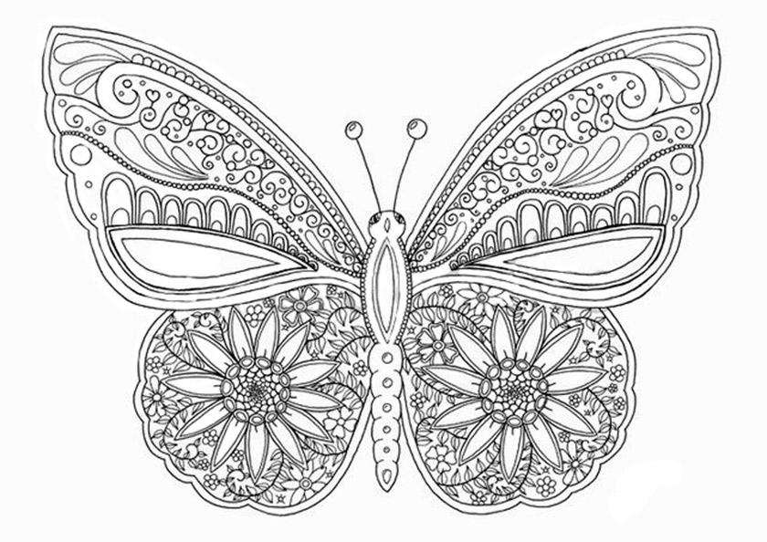 Schmetterling 15 Ausmalbilder Fur Erwachsene